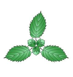 Three hazelnuts and leaves of hazel vector