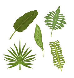 white background with set types of tropical leaves vector image