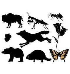 Wildlife at forest vector