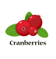 cranberries isolated icon for vector image vector image
