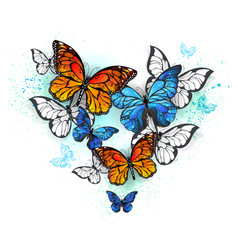 morpho and monarchs vector image
