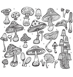 set of sketch of mushrooms vector image vector image