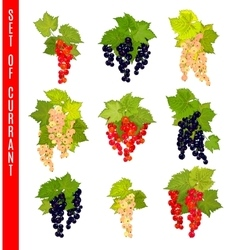 Set of doodle berries currant vector