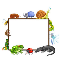 border template with many insects vector image vector image