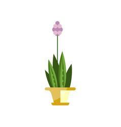 Flowering house plant indoor flower in pot vector