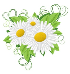 Flower camomile vector