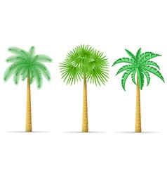 Palm tree 16 vector