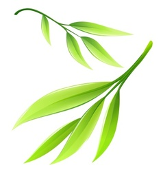 Branch with green bamboo leaves vector