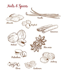 Set of with Spices and Nuts vector image