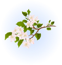 Apple tree branch with flowers nature background vector