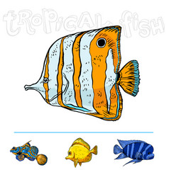 bright tropical sea fish vector image