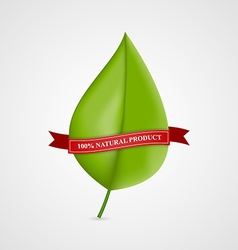 Leaf Banners and Labels with Red Ribbon Nature vector image