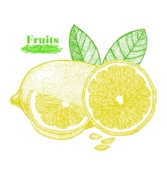 Fruit lemon with leaf and slice hand draw sketch vector