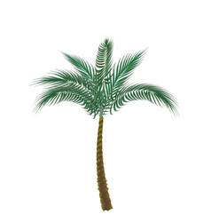 tropical green palm isolated on white background vector image vector image