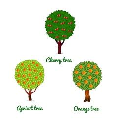 Fruit trees cherry apricot and orange vector