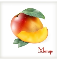 Ripe mango on the white vector