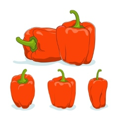 Orange bell peppersweet pepper or capsicum vector