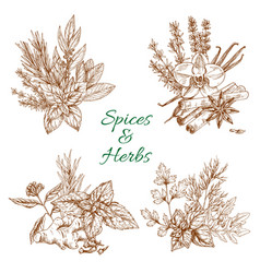 spices or herbs sketch seasonings poster vector image vector image