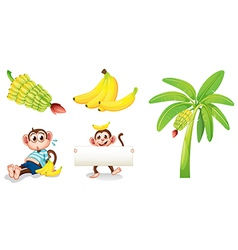 Bananas and monkeys with an empty signboard vector image