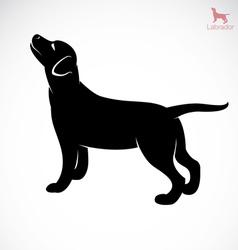 Dog labrador vector