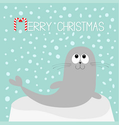 Merry christmas candy cane text sea lion harp vector