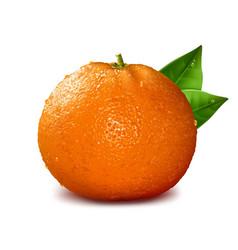 Orange with drops of water vector