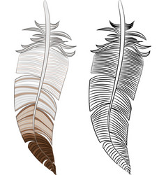 Feather color and outline vector