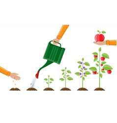 Growth of plant from sprout to fruit vector