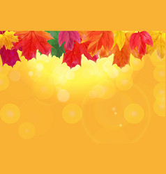 shiny autumn natural leaves background vector image vector image