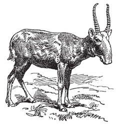 Wild goat vector