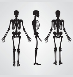 human skeleton silhouette black vector image vector image