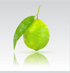 Lime with leaf polygonal with vector