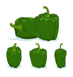 Green bell peppersweet pepper or capsicum vector