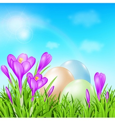 Easter card with eggs and violet crocuses vector image vector image