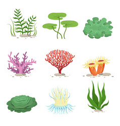 Sea aquatic fauna underwater plants and corals vector