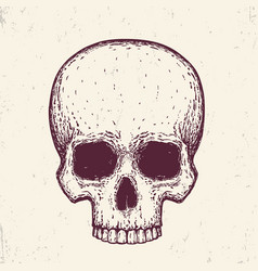 human skull hand drawn vector image