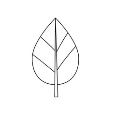 Line natural leaf botany of tropical plant vector