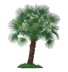 Palm Tree and Green Grass vector image