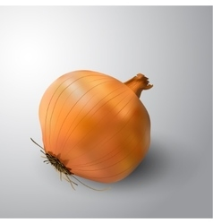 Yellow onion isolated on white background vector