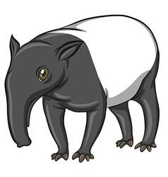 Tapir vector image