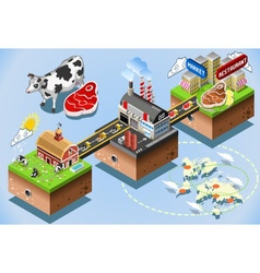 Isometric infographic beef distribution chain vector