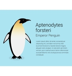 Emperor penguin flat isolated on vector