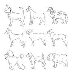 Set of purebred dogs in linear style vector image