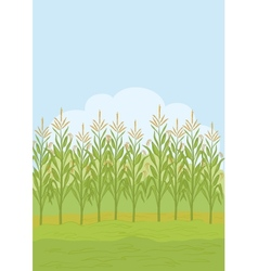 Field with maize vector