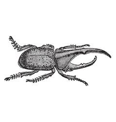 Hercules beetle vintage vector