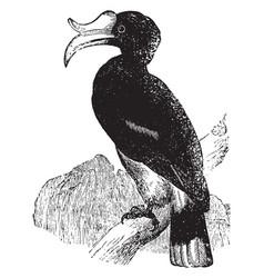 Hornbill vintage vector