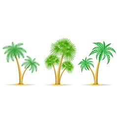 Palm tree 17 vector