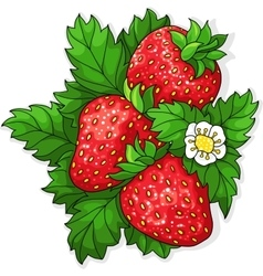 Ripe juicy strawberries vector image vector image