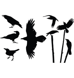 Crows silhouettes vector image