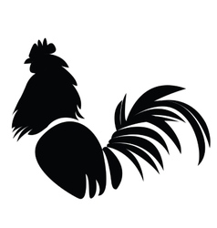 Isolated rooster vector